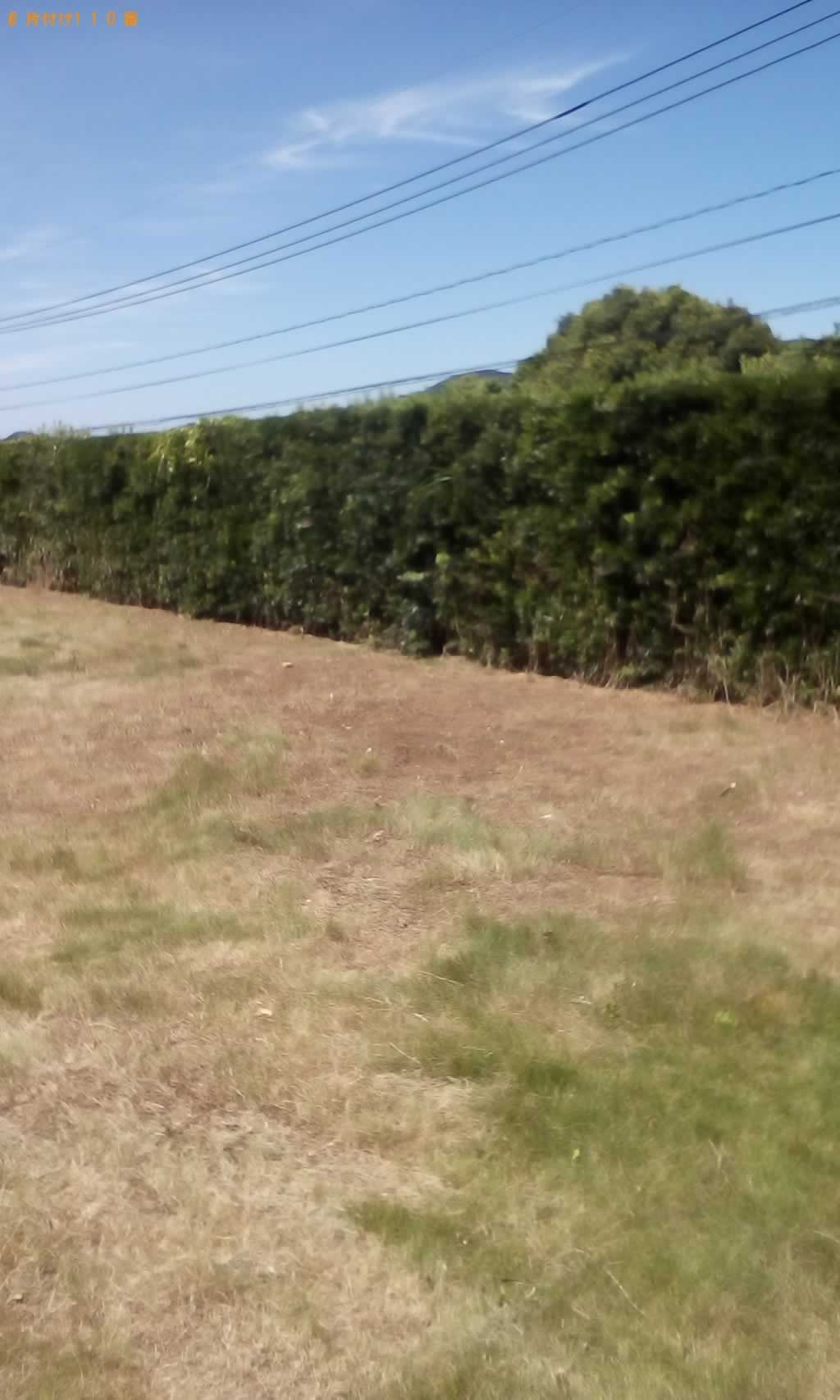 草刈りサービス施工後
