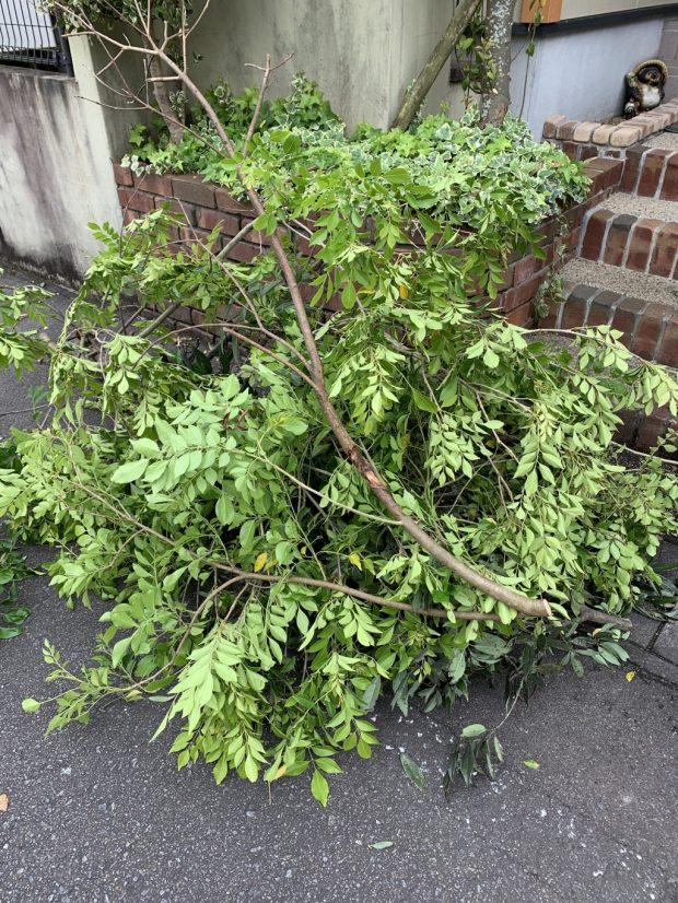 【宮崎市桜町】庭木の伐採・回収 お客様の声