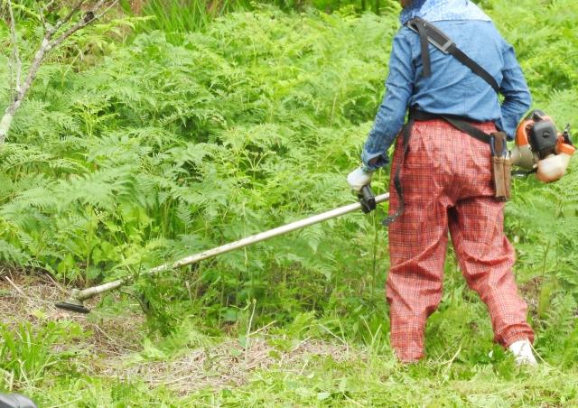 宮崎市で草刈りにかかる料金相場は?追加料金や業者選びのコツまで解説