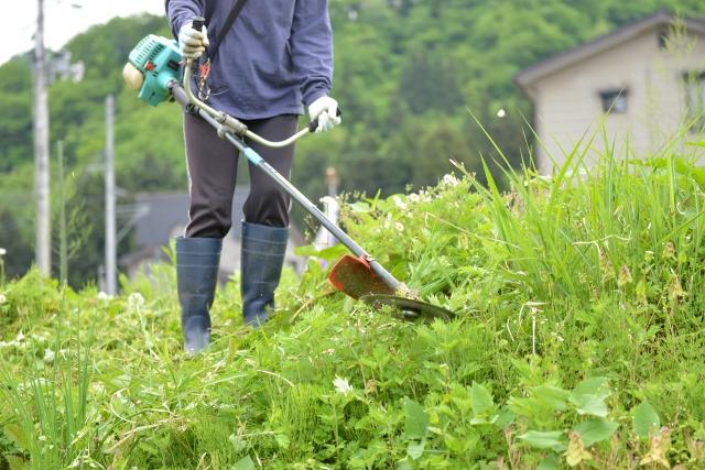 延岡市で草刈りに最適な年3回の時期~楽に草刈りを終えるコツまで徹底解説